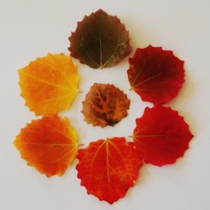 Leaf life cycle