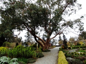 View to Eucalyptus